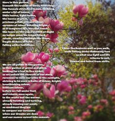 Here in this garden beneath the trunks of trees, towering; like funnels stretched to sun, suckling, under a lid of leaves, little leaves, light leaves, the leaves of grass, precious petals procure …