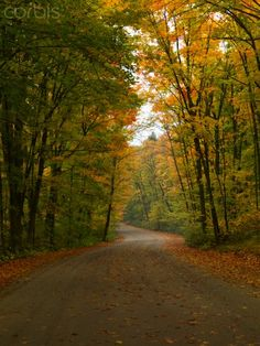 Winding unpaved road through misty forest in fall, Algonquin Provincial Park, Ontario, Canada, North America