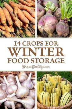 14 Crops for Winter Food Storage You don't need a root cellar to keep storage crops in winter. A basement maintains a steady temperature and is usually cooler than the rest of the house. Consider any location that stays above freezing through the fall and Winter Vegetables, Growing Vegetables, Fruits And Veggies, Organic Gardening, Gardening Tips, Kitchen Gardening, Vegetable Storage, Root Cellar, Sustainable Living