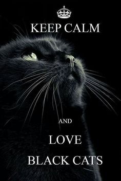 I love all cats, they all deserve warm, loving, and happy homes, that will. last throughout their lives. But black cats work 10X harder, against much Higher odds, just to get a chance at a happy home with loving people. It isn't right or fair. If they go outdoors, They face higher likelihood of abuse, car accidents, cruelty, even poisoning, by otherwise normal people with irrational fear of them. Please consider teaching your cat, but especially black cats to be in door cats. If you like,