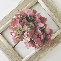 Hydrangeas are turning very autumnal now! #helloautumn #hydrangea #flowerlove