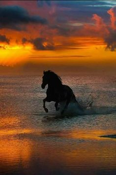 Horse running in the water at sunset.