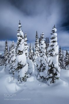 Snow Pines Northern BC by intrepidphotos #nature #mothernature #travel #traveling #vacation #visiting #trip #holiday #tourism #tourist #photooftheday #amazing #picoftheday