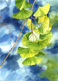 Ginkgo leaves make beautiful patterns of light and shadow.