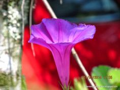 Mi Galeria de Fotos IV - 117534983002754479926 - Álbumes web de Picasa