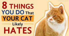 Kitties are exquisitely sensitive creatures that thrive on delicate handling; a wrong look or a meal served late can put you in the doghouse with your cat. http://healthypets.mercola.com/sites/healthypets/archive/2015/08/08/8-actions-offending-to-cats.aspx
