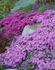 Beautiful Spring Ground Cover Ideas