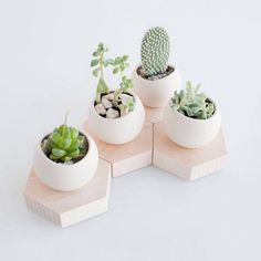 A cactus is a superb means to bring in a all-natural element to your house and workplace. The flowers of several succulents and cactus are clearly, their crowning glory. Cactus can be cute decor ideas for your room. Minimalist Bedroom, Minimalist Decor, Minimalist Kitchen, Minimalist Interior, Minimalist Living, Minimalist Style, Decoration Cactus, Home Decoration, Wall Decorations