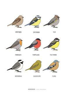 Julisteessa on 9 yleistä suomalaista lintua. Kuvitus on teollisen muotoilijan Netta Korhosen tekemä. Julisteen koko on 30x40cm.
