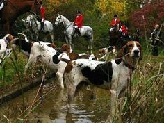 Dogs having fun running the countryside