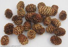 Mimibazar -  DEKORAČNÍ ŠIŠKY malé NEBO velké Almond, Sport, Photos, Deporte, Excercise, Almond Joy, Sports, Almonds, Exercise