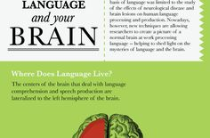 For centuries, researchers have studied the brain to find exactly where mechanisms for producing and interpreting language reside. Theories abound on how humans acquire new languages and how our developing brains learn to process languages. We take a look at the... #brain #chomsky #infographic