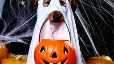 Los 20 disfraces para perro más adorables para este Halloween | Perro Genial