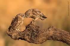 that's love by Amnon Eichelberg on 500px