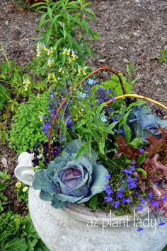 RAMBLINGS FROM A DESERT GARDEN....: Edible Plants That Do Double Duty as Ornamentals