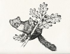 milk-paws:  In progress Pine marten on oak branch India ink on Arches This image is a design for a tattoo. Please respect my client and do not use this image for your own tattoo. Thank you!