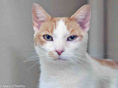 PetHarbor.com: Guiness, neutered male about 7 years old, at Fairfax Co. Animal Services, Fairfax, VA since Jan. 2014