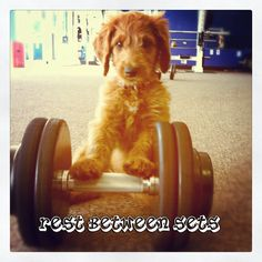 Even our furry friends require regular exercise.