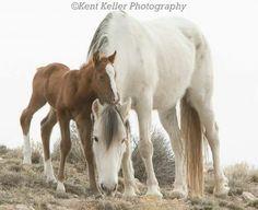 American Wild Horse Preserve via Facebook
