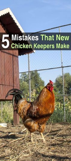 If you are a new chicken keeper, there are going to be things that don't occur to you until it's too late. But by learning from the mistakes of others.