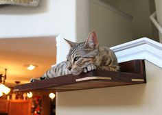Large Handcrafted Walnut  Silver Maple Elevated Cat Bed