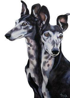 Me & My Shadow Greyhound Galgo Sighthound by TanjaOnTheWall