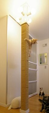 Mega scratching post                                                                                                                                                     More