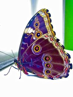 Butterfly Butterfly Painting, Butterfly Wallpaper, Butterfly Wings, Butterfly Effect, Butterfly Kisses, Beautiful Bugs, Beautiful Butterflies, Beautiful Pictures, Beautiful Creatures