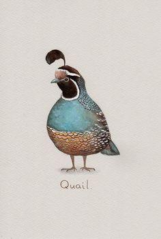 Quail Art Print from an original watercolour painting by Irene Owens Watercolor Bird, Watercolour Painting, Watercolours, Ave Tattoo, Southwest Art, Gourd Art, Bird Illustration, Bird Drawings, Beautiful Birds