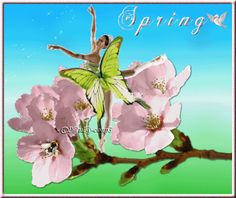Spring dance of the butterfly