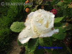SOÑAR  Lluvia/ Llover Soñar con la lluvia es soñar con un símbolo de la fertilidad y la limpieza. Si sueña que se moja en la lluvia, significa que pronto se sentirá libre y limpio de sus problemas actuales en la vida real. Ver llover y escuchar el ruido de la lluvia en sus sueños, representa perdón, y también buena suerte y amor.   https://www.cuarzotarot.es/ #DiaDeGalicia #FelizLuneS #Santiago #SantiagoApostol