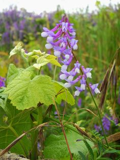 Furighedda gardening: Ancora spontanee d'effetto!! - by Tyziana