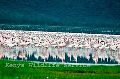 Lake Nakuru National Park (Kenya)