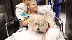 perro-en-hospital