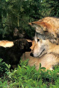 A wolf.          P.s A wolf's pup is always a dark color. (Dark Brown, black, dark gray, etc.)