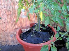drip irrigation system from a pop bottle. Holes in bottom of bottle, gravel in to weigh it down, cap back on & put into soil  a few inches.