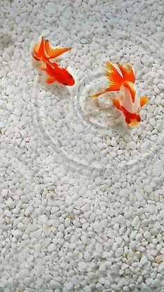 Witte stenen zorgen dat je vissen erg in contrast te zien zijn. Als je t in t licht houdt worden ze wel vrij vies.
