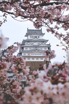 Himeji Castle with cherry blossom