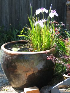 large water bowl | Flickr -Iris and a lilly in a water bowl