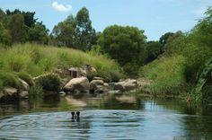Kedron Brook Floodway Dog Park in Gordon Park