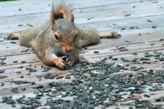 One happy squirrel. Via All Things Country