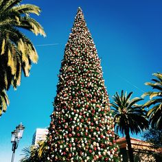Love the holiday juxtaposition: Christmas Tree amongst the palms. Photo courtesy of canvastravelco on Instagram.