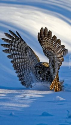 Beautiful Photos Of Nature, Beautiful Nature Wallpaper, Nature Images, Nature Photos, Beautiful Birds, American Flag Drawing, Types Of Eagles, World Pictures, Birds Of Prey