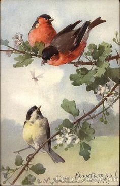 Three birds in tree C. Klein