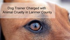 Man Charged with Cruelty to Animals in Larimer County, Colorado. Learn more about this offense, and why you need an experienced criminal defense attorney to fight on your behalf!