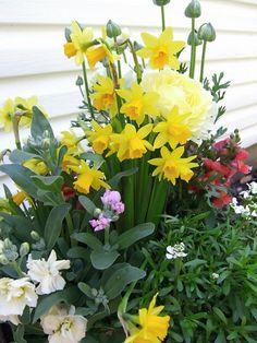 My Spring container garden-2011