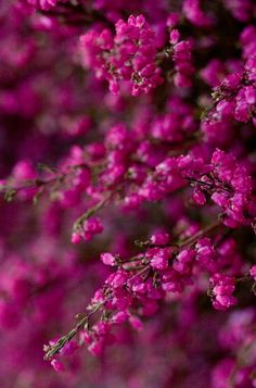 It's a beautiful world! Magenta, Green And Purple, Pink Purple, Hot Pink, Purple Wine, World Of Color, Pink Aesthetic, Violet, My Favorite Color