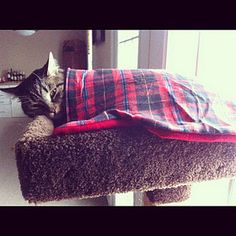 DIY: Kitty Blanket.. Had a blanket for my dog and he enjoyed it(: