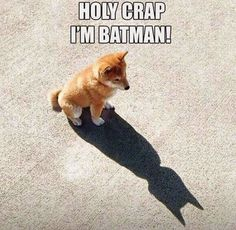 Holy Crap, Im Batman! More amazing and funny stuff at http://funiest-stuff.com/funny-dog-pictures/