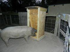 scrap wood Pig Feeder